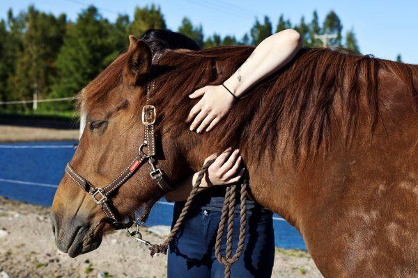 kuva hevosesta