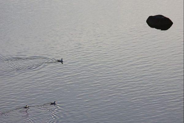 kuva järvestä